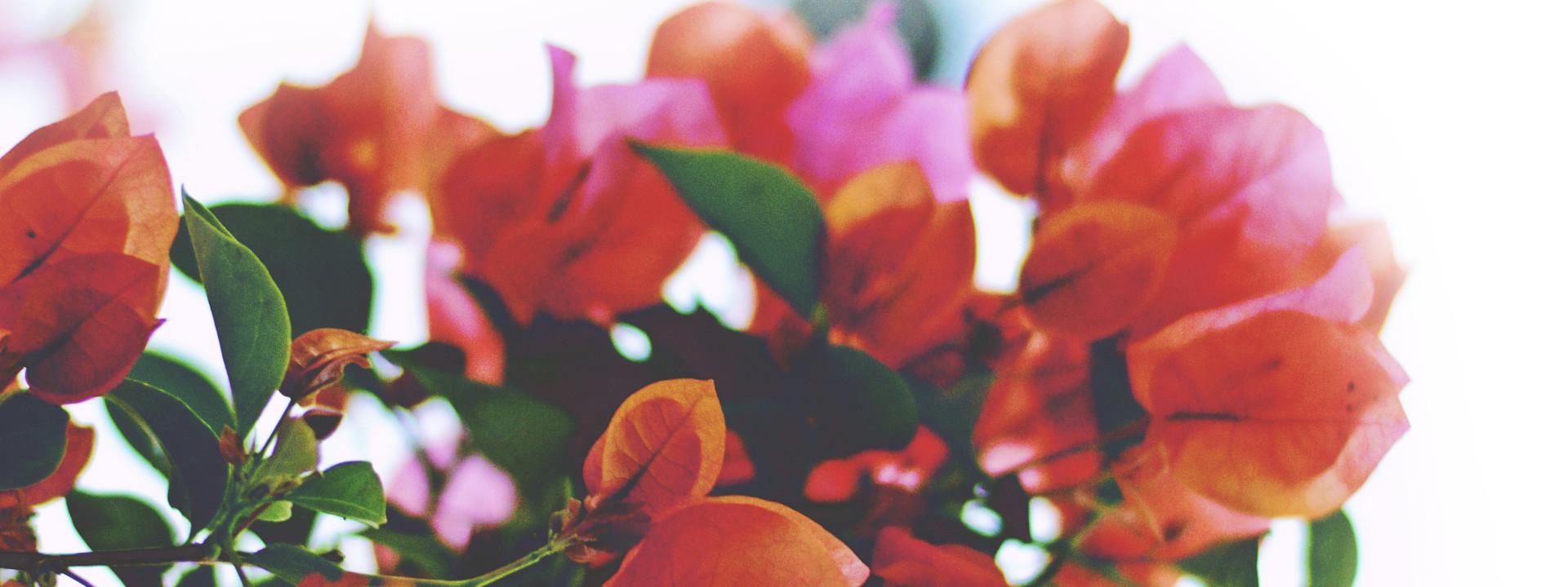 Céline Bien-Être - Fond fleur rouge
