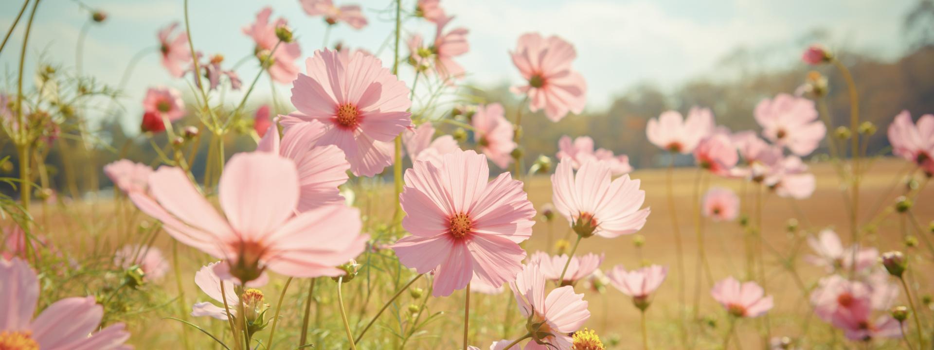 Céline Bien-Être - Fond fleurs
